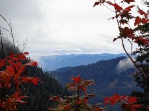 Lingering fall foliage
