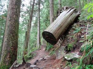 Falling log!