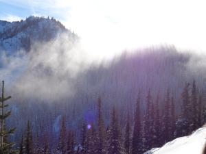 Sun streaming through trees and fog