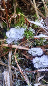 Frost flowers!