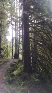 Trail winding through mossy trees