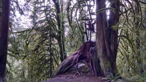Jonathan on a huge old tree stump