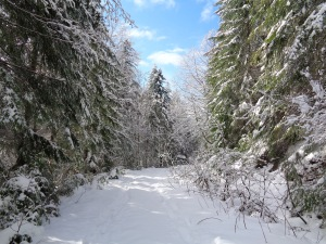 Even logging roads look nice in snow