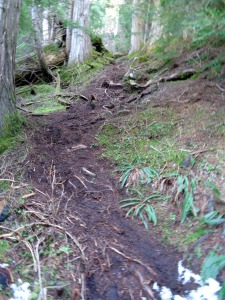 Steep rooty section