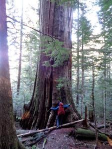 Huge tree!