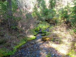 Mossy creek bed