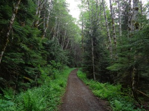 Upper trail, wide, flat, and green!