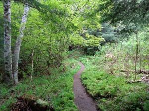Narrow, windy lower trail
