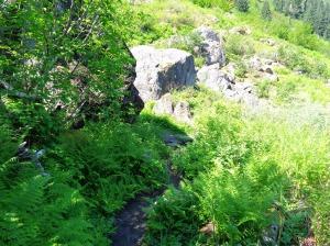 Bottom of the fern slopes