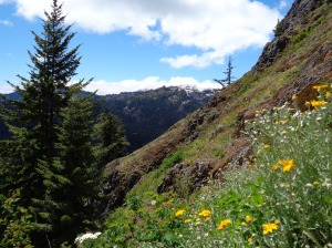 Rampart Ridge beyond the wildflowers