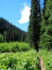 Flat, lush trail